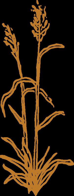 fff-logo_grass2-gold_2500px